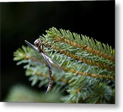 Hanging Around-fawn Darner Metal Print