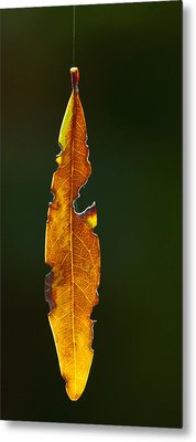 Hanging By A Thread Metal Print by Don Durfee