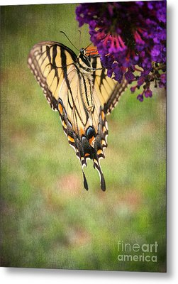 Hanging On Metal Print by Darren Fisher