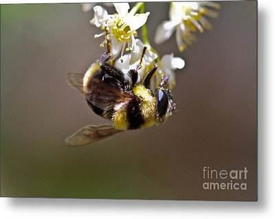 Hanging With The Bumble Bee Metal Print by Mitch Shindelbower
