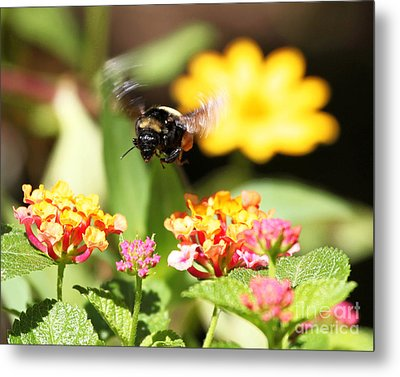 Metal Print featuring the photograph Happy Bee by Luana K Perez