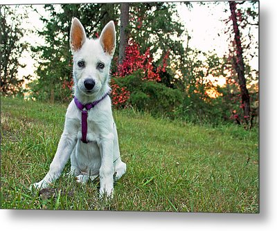 Happy Puppy Metal Print by Tyra  OBryant