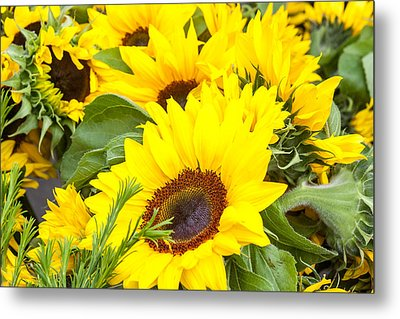 Happy Sunflowers Metal Print by Dina Calvarese