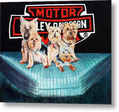 Harley Dogs Metal Print by Carolyn Ardolino