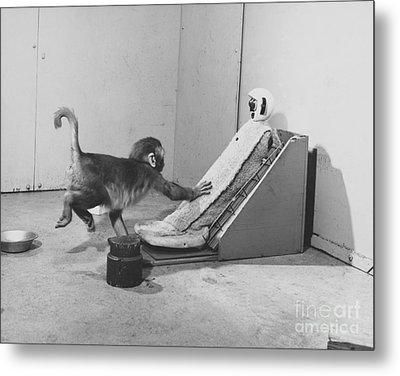 Harlow Monkey Experiment Metal Print by Science Source