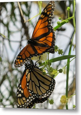 Metal Print featuring the photograph Harmony by Leslie Hunziker