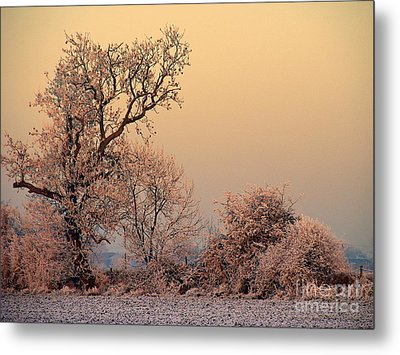 Frost 2 Metal Print by Linsey Williams