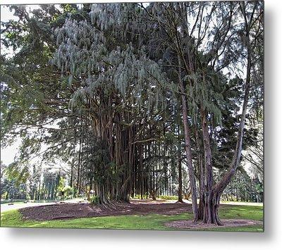 Hawaiian Banyan Tree Metal Print by Daniel Hagerman