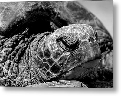 Metal Print featuring the photograph Hawaiian Basking Turtle by Elizabeth  Doran