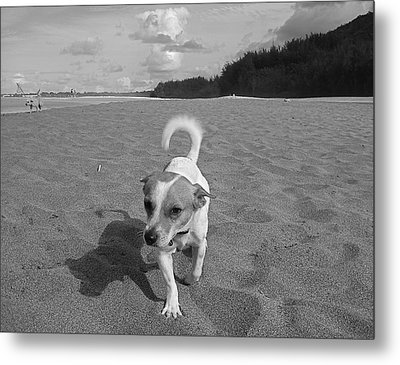 Hawaiian Beach Dog Metal Print