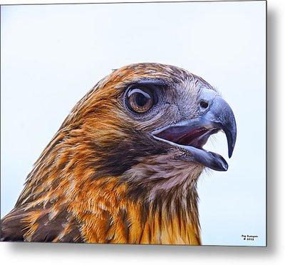 Hawk Head Metal Print by Peg Runyan