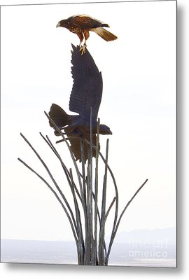 Metal Print featuring the photograph Hawk On Statue by Rebecca Margraf