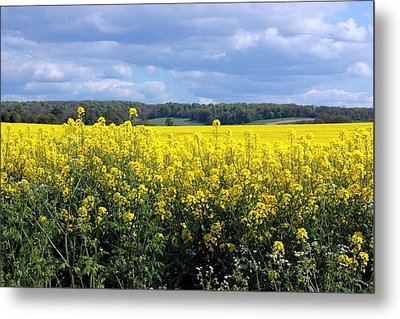 Hay Fever Metal Print by Rdr Creative