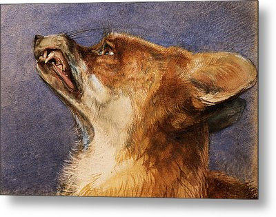 Head Of A Fox Metal Print by John Frederick Lewis