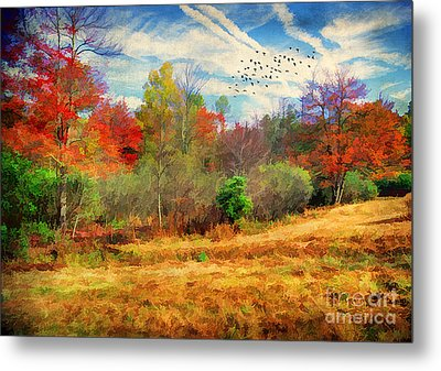 Heading South Metal Print by Darren Fisher