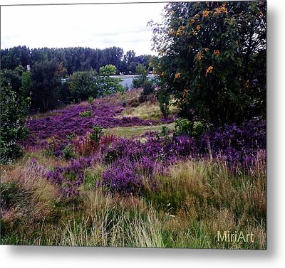 Heathers On The Moor 2011 Metal Print by Miriam Shaw