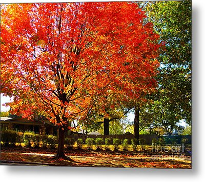 Hedge Row Metal Print by Chris Berry