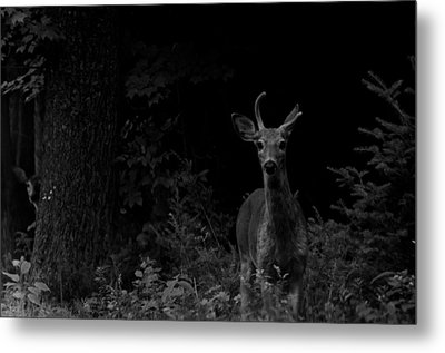Metal Print featuring the photograph Hello Deer by Cheryl Baxter
