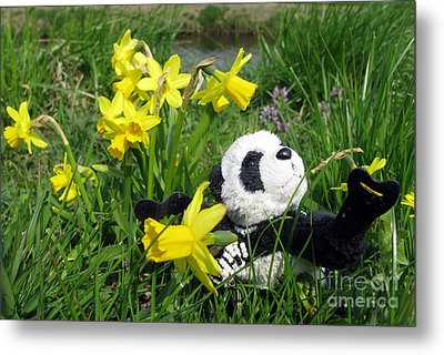 Hello Spring. Ginny From Travelling Pandas Series. Metal Print by Ausra Huntington nee Paulauskaite