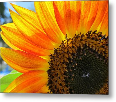 Metal Print featuring the photograph Hello Sunflower by Tina M Wenger