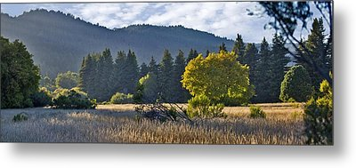 Henry Cowell Meadow Sunset Metal Print by Larry Darnell