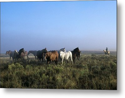 Herd Of Horses And Cowboy On Horseback Metal Print by Natural Selection Craig Tuttle