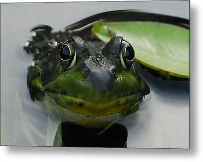 Here's Looking At You. Metal Print by Lisa Masciadrelli