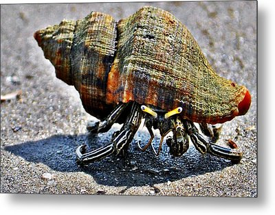 Metal Print featuring the photograph Hermit Crab by John Collins
