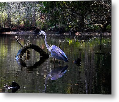 Heron And Root Metal Print by Christy Usilton