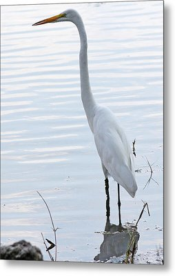 Heron Reflection Metal Print by Becky Lodes