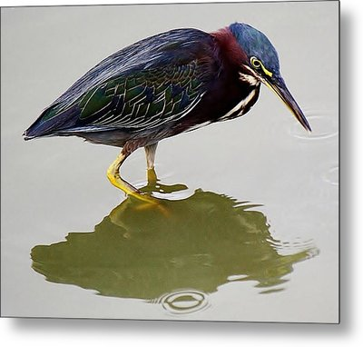 Heron Reflection Metal Print by Paulette Thomas