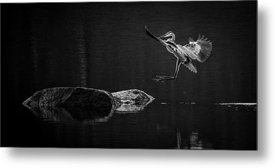 Heron's Land Metal Print by Brian Young
