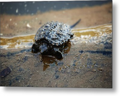 Hey Hold Up. Metal Print by Kelly Rader