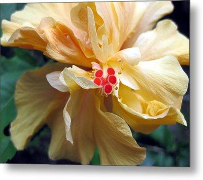 Hibiscus Dancer IIn Yellow Metal Print