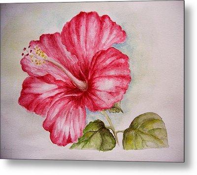 Hibiscus Flower Metal Print by Draia Coralia