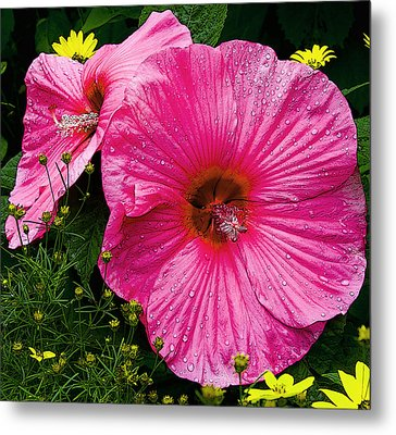 Metal Print featuring the photograph Hibiscus by Michael Friedman
