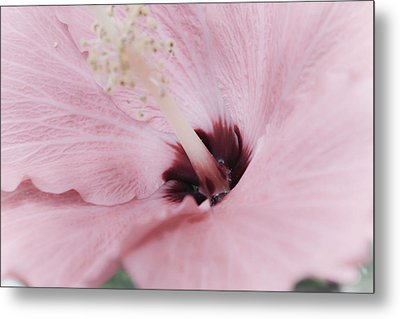 Metal Print featuring the photograph Hibiscus Moments by Janie Johnson