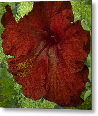 Hibiscus Plus Fern Metal Print