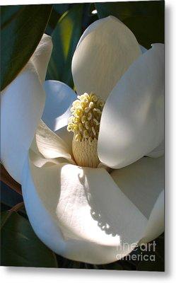 Hidden Magnolia Metal Print by Carol Groenen
