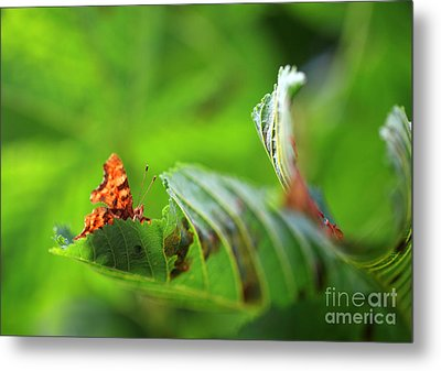 Hiding Comma Butterfly Metal Print by Clare Scott