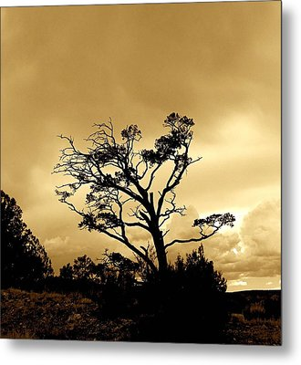 High Country Tree Metal Print by FeVa  Fotos