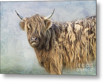 Highland Cattle Metal Print by Louise Heusinkveld
