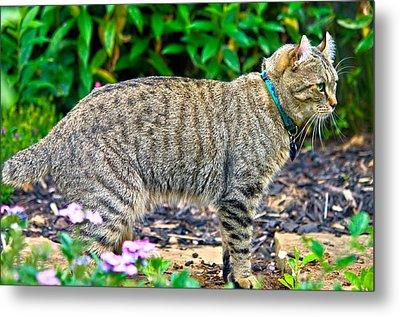 Highland Lynx Cat In Garden Metal Print by Susan Leggett