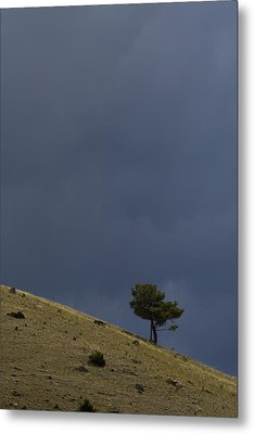 Metal Print featuring the photograph Hillside Tree by J L Woody Wooden