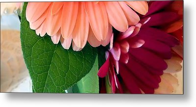Metal Print featuring the photograph Hint Of Daisies by Lynnette Johns