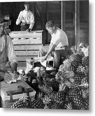 Historic Pineapple Factory - Florida - C 1906 Metal Print by International  Images