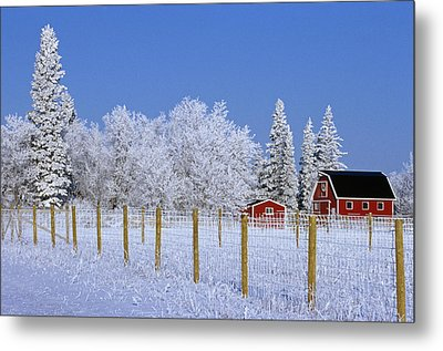 Hoarfrost On Trees Around Red Barns Metal Print by Mike Grandmailson