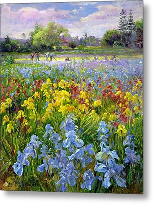 Hoeing Team And Iris Fields Metal Print by Timothy Easton