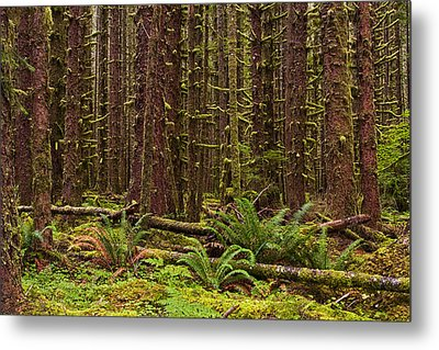 Hoh Rainforest Metal Print by Mark Kiver