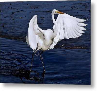 Hold On I'm Coming Metal Print by Paulette Thomas